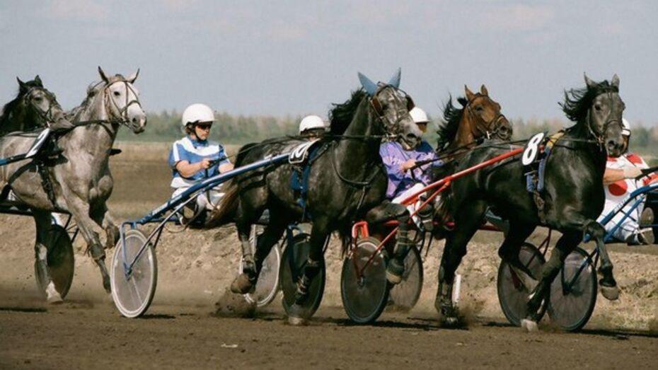 Воронежцев пригласили на соревнования по конному спорту
