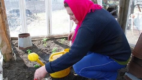 Огородники из Кантемировского района делают теплицы из старых окон