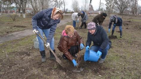 В Калачеевском районе высадили 500 деревьев в рамках акции «Лес Победы»