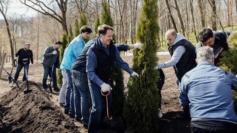 Воинский мемориал в воронежском парке «Динамо» украсили туи
