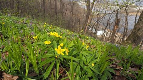 Первые апрельские выходные в Воронеже будут теплыми
