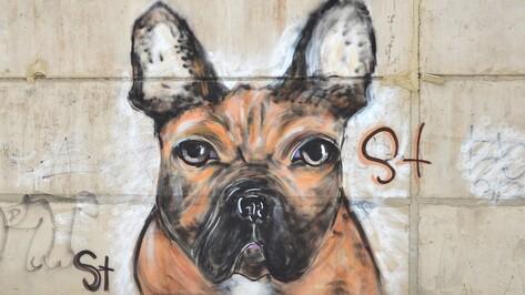 Семилукский граффитист посвятил новый рисунок своему питомцу