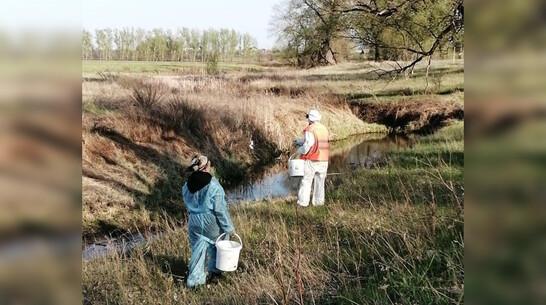 В Павловске приступили к обработке территорий от комаров и клещей