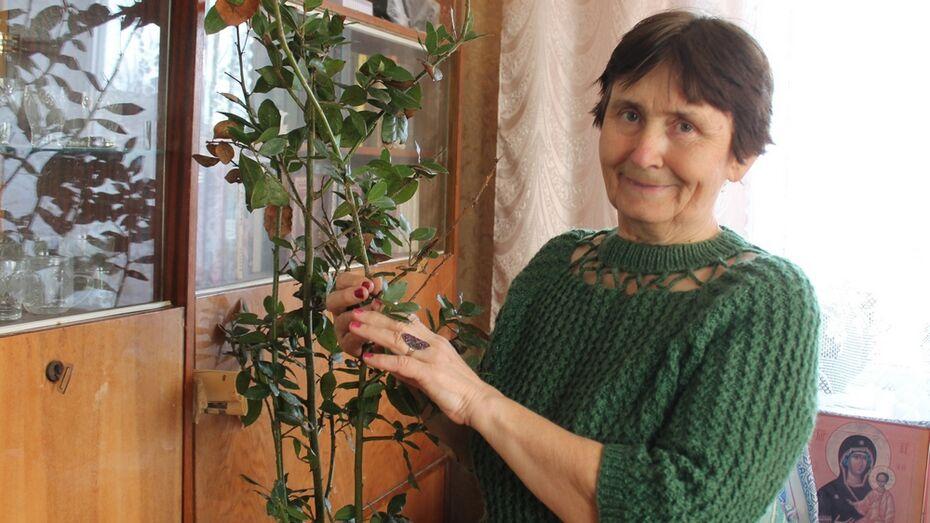 Жительница Хохольского района вырастила дома лавр