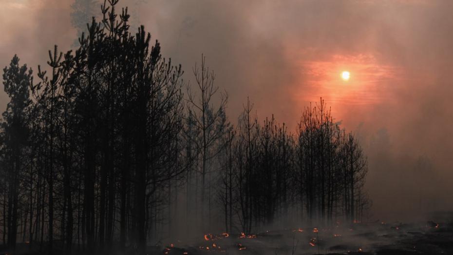 Спасатели локализовали пожары у 2 воронежских поселков