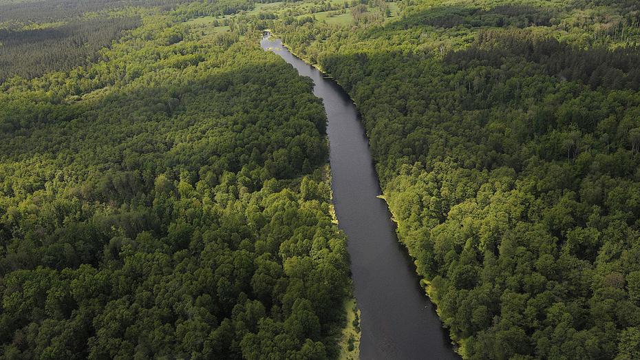 Власти рассказали, какие территории войдут в зеленый пояс вокруг Воронежа