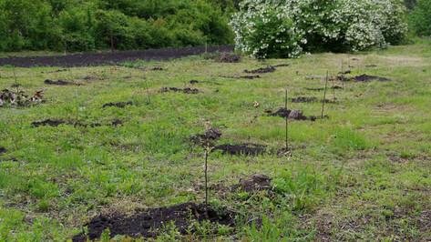 В парке-музее на территории Воронежского ботсада высадили первые «авторские» растения