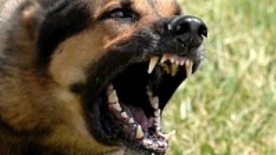Собака, застреленная павловскими полицейскими, не была больна бешенством