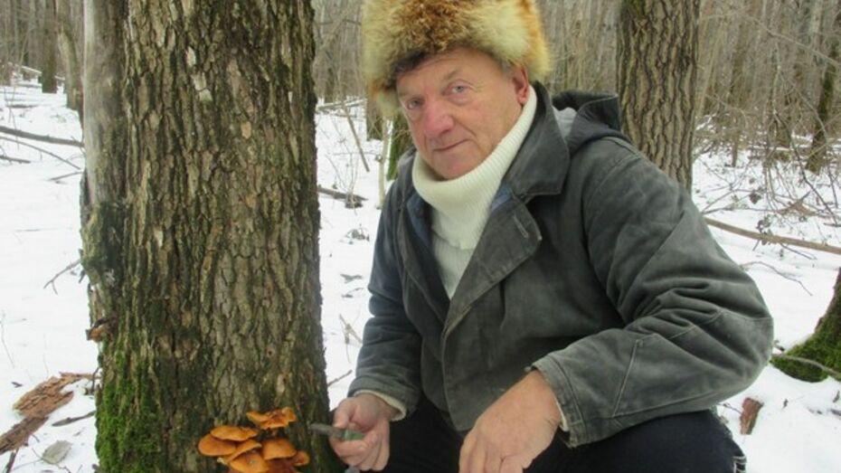 Грибановцы ходят за грибами в январе