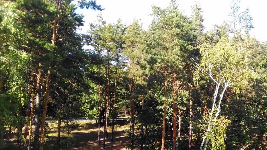 Воронежская область использовала 53% суммы федеральных субсидий на сохранение лесов