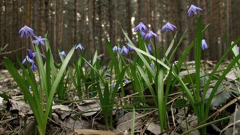 В первый день весны в Воронеже будет тепло