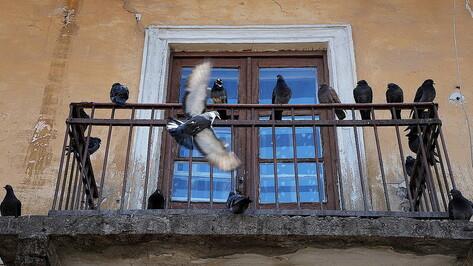 Воронежцы пожаловались в управляющую компанию на голодных голубей