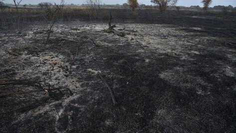 Спасатели остановили пожар в 400 м от воронежского поселка