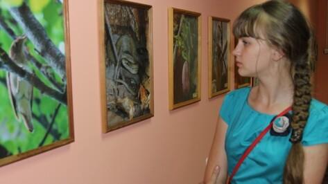 В Новохоперском краеведческом музее открылась выставка  «Зеленый дым»
