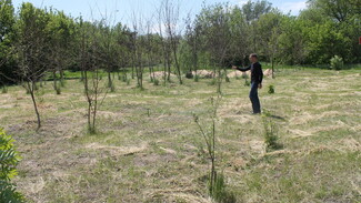 В петропавловском селе Березняги построят Аллею памяти