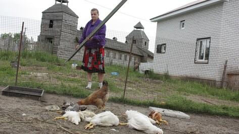 В Новой Усмани семья лис растерзала более 100 кур и уток