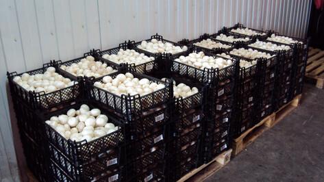 В Воронеже изъяли из продажи 11 т неизвестных грибов