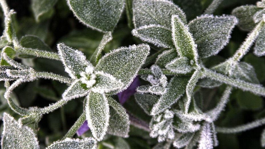 Воронежцев предупредили о ночных заморозках до –3 градусов