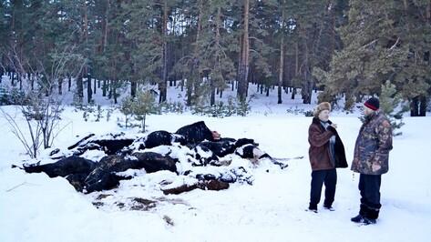 Прокуратура накажет агрофирму за падеж скота в Воронежской области
