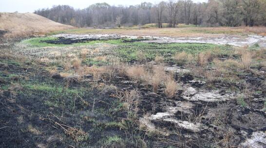 Росприроднадзор разбирается с загрязнением почвы в борисоглебском селе