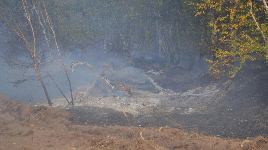 На восстановление сгоревшего леса в Лискинском районе понадобится 2 года