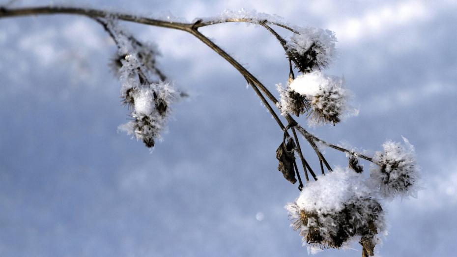 Синоптики: в субботу снегопад в Воронеже прекратится