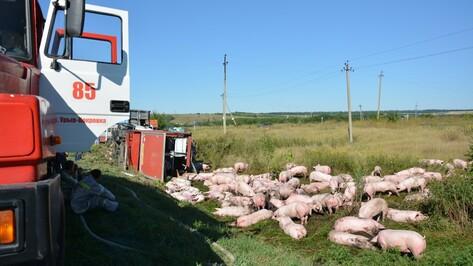 В Воронежской области перевернулась перевозившая свиней на мясокомбинат фура