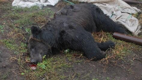 Владелец зоопарка под Воронежем попал под следствие после нападения медведя на инвалида