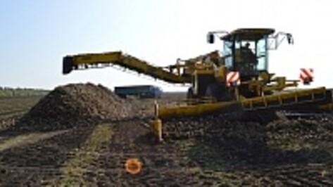 Облправительство поддержит производство воронежских семян сахарной свеклы
