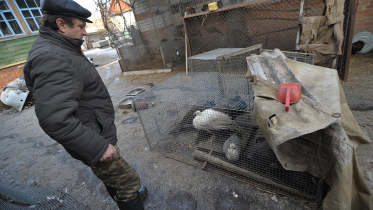 В селе Коротояк в первый день паводка утонули 4 фазана, 8 кур, «Жигули», мотоцикл и соленья в погребах