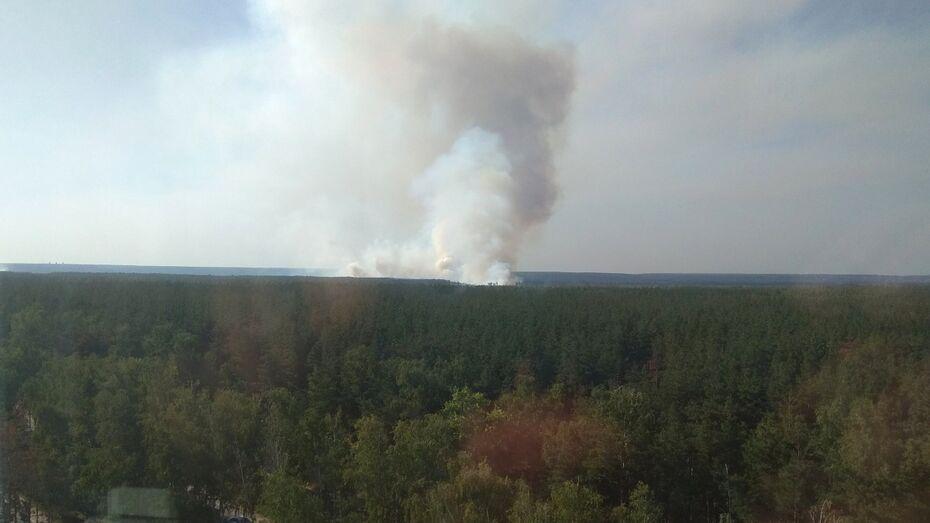 Площадь пожара в Железнодорожном районе Воронежа увеличилась до 5 га