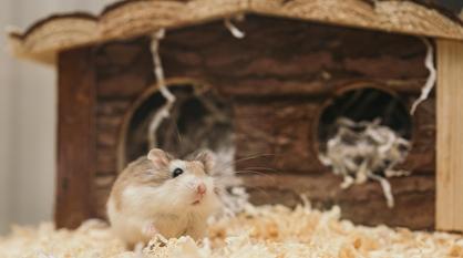 В Госдуму внесли законопроект о запрете на продажу животных в зоомагазинах