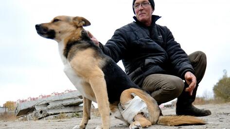 В Воронеже на зооакции будут искать хозяев трехлапому псу Тоше