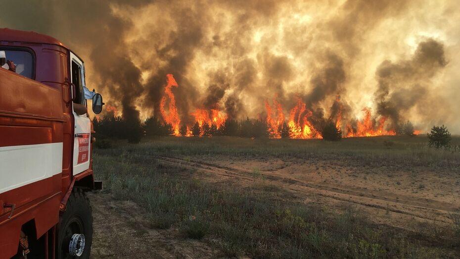 В Богучарском районе огонь подобрался к селам Поповка и Вервековка