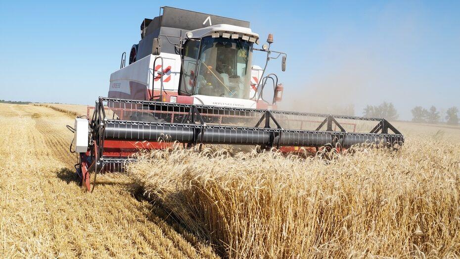 В Богучарском районе вырастили рекордный урожай ранних зерновых