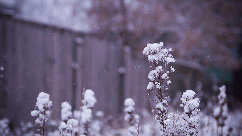 Синоптики спрогнозировали похолодание до -12 градусов в выходные в Воронеже