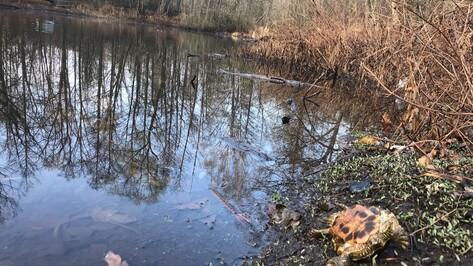 Воронежские власти: в Черепашьем озере не случилась экологическая катастрофа