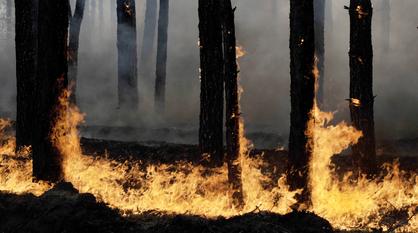 Пожары в Воронежской области достигли Хоперского заповедника