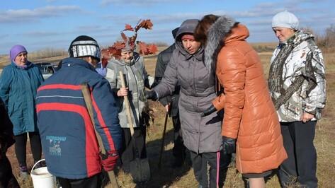 В Воронежской области в работу ТОС включились 85 тыс общественников