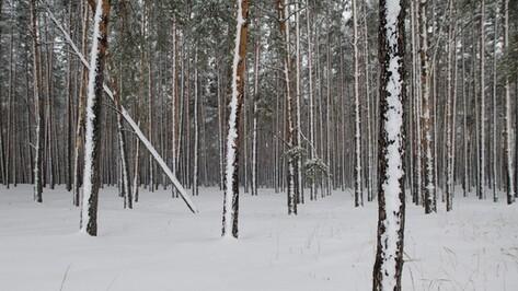 Пропавшего в Воронеже 18-летнего курьера «Яндекс.Еды» нашли повешенным на дереве