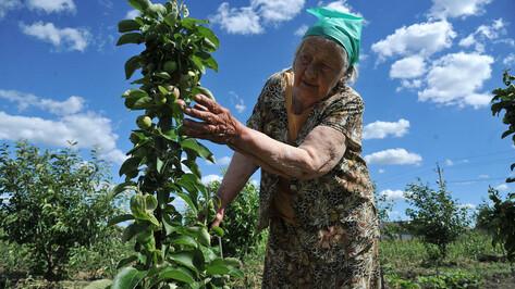 Аномальная зима. Как теплая погода скажется на урожае в Воронежской области