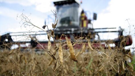 Государство поддержит воронежских аграриев в связи с ростом цен на топливо