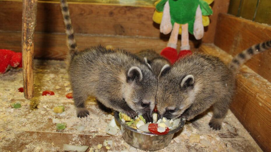 Воронежский зоопарк пригласил горожан на кормление животных