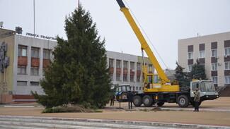 В Верхнем Мамоне супруги подарили землякам 12-метровую новогоднюю ель