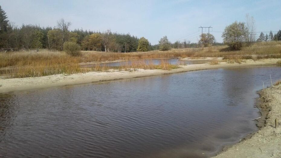 Заповедник в Воронежской области показал на фото обмелевшее озеро
