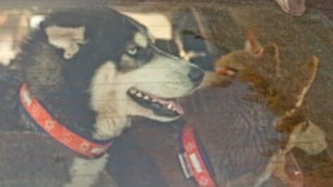 В Воронеже владельцы породистых собак отказались помогать бездомным дворнягам