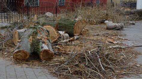 В центре Воронежа срубили 92 аварийных дерева за месяц