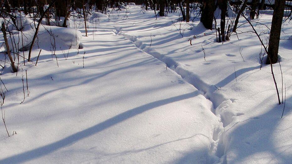 В Таловском районе в середине марта финиширует зимний учет животных