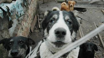 Мэрия Воронежа выберет участок под приют для 500 бездомных животных