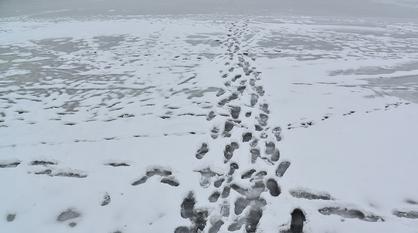 Тела ребенка и мужчины достали из воды в Воронежской области